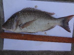 ( - Leth2)  @11 [ ] Copyright (2014) Smit R Lende College of Fisheries, JAU, Veraval