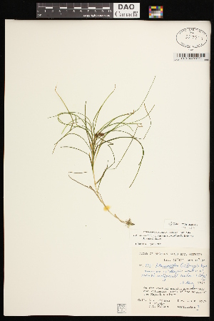 (Potamogeton filiformis - CCDB-26261-F09)  @11 [ ] CreativeCommons - Attribution Non-Commercial Share-Alike (2017) Maria Kuzmina Centre for Biodiversity Genomics
