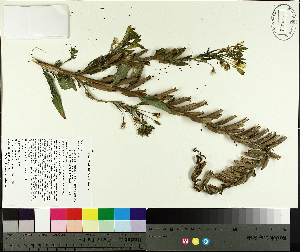 ( - TJD-412)  @11 [ ] by-nc (2014) MTMG McGill University Herbarium