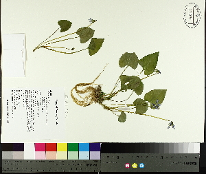 ( - TJD-044)  @11 [ ] CreativeCommons - Attribution Non-Commercial (2014) MTMG McGill University Herbarium
