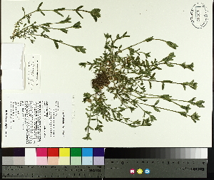 ( - TJD-056)  @11 [ ] by-nc (2014) MTMG McGill University Herbarium