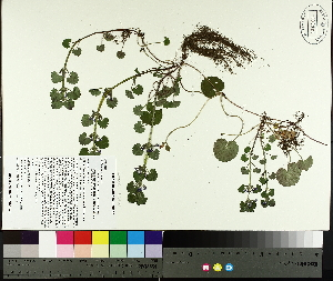 ( - TJD-066)  @11 [ ] by-nc (2014) MTMG McGill University Herbarium