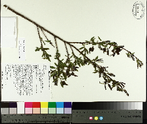 ( - TJD-071)  @11 [ ] by-nc (2014) MTMG McGill University Herbarium