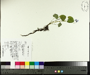 ( - TJD-076)  @11 [ ] CreativeCommons - Attribution Non-Commercial (2014) MTMG McGill University Herbarium