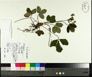 ( - TJD-081)  @11 [ ] by-nc (2014) MTMG McGill University Herbarium