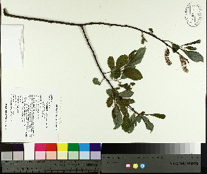 ( - TJD-082)  @11 [ ] by-nc (2014) MTMG McGill University Herbarium
