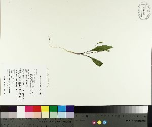 ( - TJD-098)  @11 [ ] by-nc (2014) MTMG McGill University Herbarium