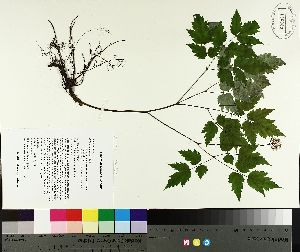 ( - TJD-102)  @11 [ ] by-nc (2014) MTMG McGill University Herbarium