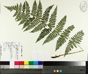 ( - TJD-485)  @11 [ ] by-nc (2014) MTMG McGill University Herbarium