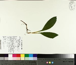 ( - TJD-126)  @11 [ ] by-nc (2014) MTMG McGill University Herbarium