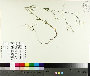 ( - TJD-134)  @11 [ ] by-nc (2014) MTMG McGill University Herbarium