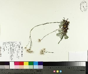 ( - TJD-150)  @11 [ ] by-nc (2014) MTMG McGill University Herbarium