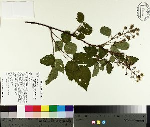 ( - TJD-167)  @11 [ ] by-nc (2014) MTMG McGill University Herbarium