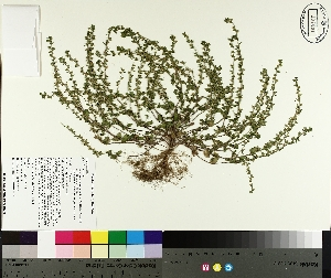 ( - TJD-175)  @11 [ ] by-nc (2014) MTMG McGill University Herbarium