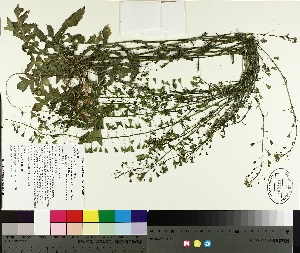 ( - TJD-177)  @11 [ ] by-nc (2014) MTMG McGill University Herbarium