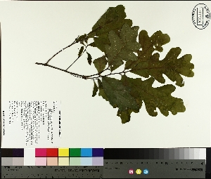( - TJD-180)  @11 [ ] by-nc (2014) MTMG McGill University Herbarium