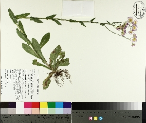 ( - TJD-185)  @11 [ ] by-nc (2014) MTMG McGill University Herbarium