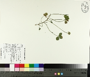 ( - TJD-191)  @11 [ ] by-nc (2014) MTMG McGill University Herbarium