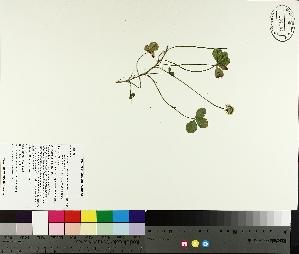 ( - TJD-191)  @11 [ ] CreativeCommons - Attribution Non-Commercial (2014) MTMG McGill University Herbarium