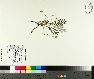 ( - TJD-192)  @11 [ ] by-nc (2014) MTMG McGill University Herbarium