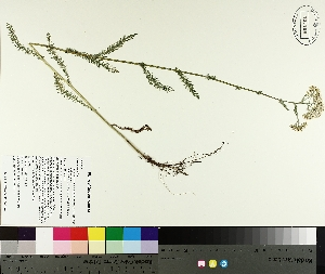 ( - TJD-193)  @11 [ ] by-nc (2014) MTMG McGill University Herbarium