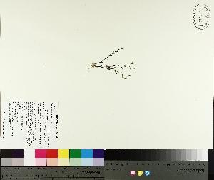( - TJD-197)  @11 [ ] by-nc (2014) MTMG McGill University Herbarium