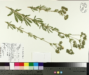 ( - TJD-198)  @11 [ ] CreativeCommons - Attribution Non-Commercial (2014) MTMG McGill University Herbarium