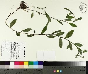 ( - TJD-199)  @11 [ ] by-nc (2014) MTMG McGill University Herbarium