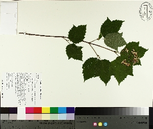 ( - TJD-212)  @11 [ ] by-nc (2014) MTMG McGill University Herbarium