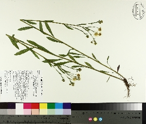 ( - TJD-235)  @11 [ ] by-nc (2014) MTMG McGill University Herbarium