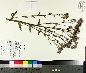 ( - TJD-252)  @11 [ ] by-nc (2014) MTMG McGill University Herbarium