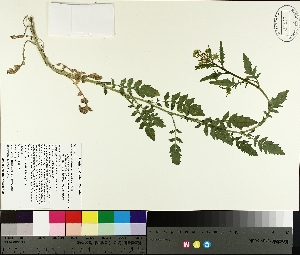 ( - TJD-254)  @11 [ ] by-nc (2014) MTMG McGill University Herbarium