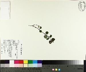 ( - TJD-260)  @11 [ ] by-nc (2014) MTMG McGill University Herbarium