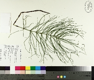 ( - TJD-504)  @11 [ ] by-nc (2014) MTMG McGill University Herbarium