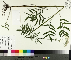 ( - TJD-282)  @11 [ ] by-nc (2014) MTMG McGill University Herbarium
