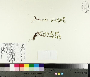 ( - TJD-298)  @11 [ ] by-nc (2014) MTMG McGill University Herbarium