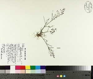 ( - TJD-323)  @11 [ ] by-nc (2014) MTMG McGill University Herbarium