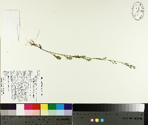( - TJD-514)  @11 [ ] by-nc (2014) MTMG McGill University Herbarium