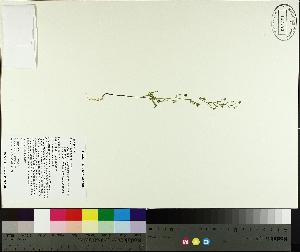 ( - TJD-359)  @11 [ ] by-nc (2014) MTMG McGill University Herbarium