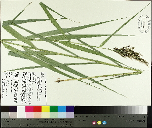 ( - TJD-423)  @11 [ ] by-nc (2014) MTMG McGill University Herbarium