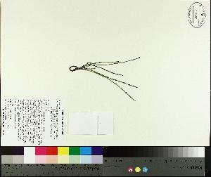 ( - TJD-507)  @11 [ ] by-nc (2014) MTMG McGill University Herbarium