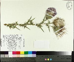 ( - TJD-426)  @11 [ ] by-nc (2014) MTMG McGill University Herbarium