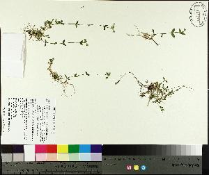 ( - TJD-576)  @11 [ ] by-nc (2014) MTMG McGill University Herbarium