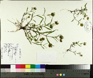 ( - TJD-658)  @11 [ ] by-nc (2014) MTMG McGill University Herbarium