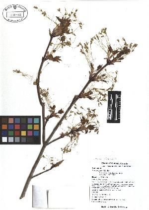 ( - TJD-011)  @11 [ ] CreativeCommons - Attribution Non-Commercial (2013) MTMG McGill Herbarium
