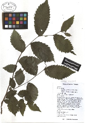 ( - TJD-107)  @11 [ ] CreativeCommons - Attribution Non-Commercial (2013) MTMG McGill Herbarium