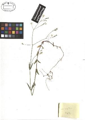 ( - TJD-134)  @11 [ ] CreativeCommons - Attribution Non-Commercial (2013) MTMG McGill Herbarium