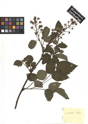 ( - TJD-167)  @11 [ ] CreativeCommons - Attribution Non-Commercial (2013) MTMG McGill Herbarium