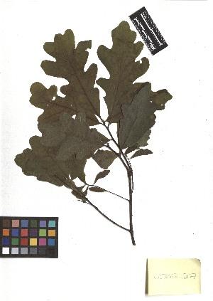 ( - TJD-180)  @11 [ ] CreativeCommons - Attribution Non-Commercial (2013) MTMG McGill Herbarium