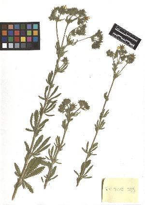 ( - TJD-198)  @11 [ ] CreativeCommons - Attribution Non-Commercial (2013) MTMG McGill Herbarium